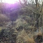 vuurtorentrail, ameland, trail, trailrunning